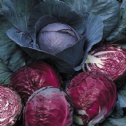 Cabbage Red Drumhead Appx 500 seeds